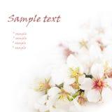 Primeras flores del resorte Imagen de archivo libre de regalías