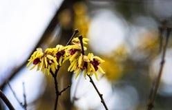 Primeras flores del resorte foto de archivo libre de regalías