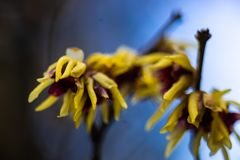 Primeras flores del resorte imágenes de archivo libres de regalías