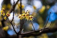 Primeras flores del resorte fotos de archivo libres de regalías