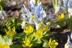 Primeras flores en primavera Imagen de archivo libre de regalías