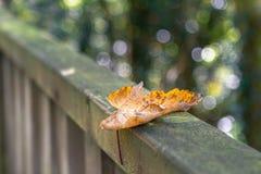 Primeras hojas de otoño en la barandilla imágenes de archivo libres de regalías