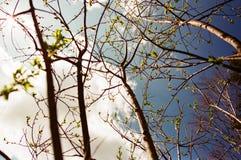 Primeras hojas en primavera fría imagenes de archivo