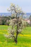 Primeras indirectas de la primavera Foto de archivo