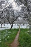 Primero nieva este año Foto de archivo libre de regalías