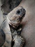 Primero plano de la tortuga Fotos de archivo libres de regalías
