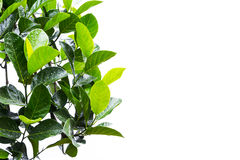 Primero plano de las hojas en blanco Fotografía de archivo