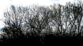 Primero plano del árbol Foto de archivo libre de regalías