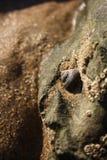Primero plano del agua de la concha marina imágenes de archivo libres de regalías