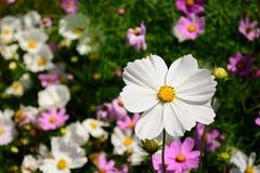 Primero plano destacado del foco selectivo de la flor blanca Fotografía de archivo