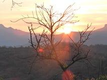 Primeros sol-rayos con un árbol del hoja-descenso imagen de archivo