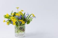 Primevères jaunes et bleues de ressort dans un verre transparent sur un lig photo stock