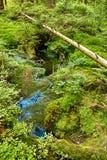 Primeval лес с болотом - HDR Стоковое Изображение RF