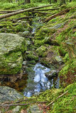 Primeval лес с The Creek - HDR Стоковое Фото