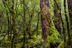Primeval forest Stock Image