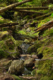 The primeval forest with the creek - HDR Royalty Free Stock Photo