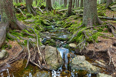 The primeval forest with the creek - HDR Royalty Free Stock Photography