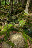 The primeval forest with the creek - HDR Royalty Free Stock Image