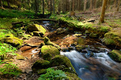 The primeval forest with the creek - HDR Stock Images