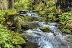 The primeval forest with the creek - HDR Royalty Free Stock Photos