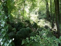 Primeval forest with green rocks.  Stock Photography