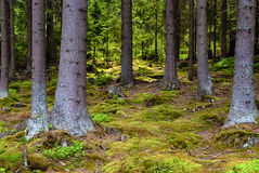 The primeval forest-HDR Stock Photos