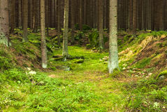 The primeval forest Royalty Free Stock Images