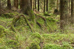 The primeval forest Royalty Free Stock Photos