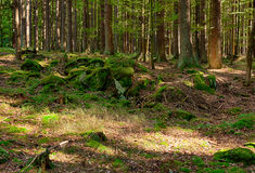 The primeval forest Stock Images
