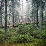 Primeval forest. Royalty Free Stock Photography