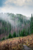 Primeval forest. Stock Photo