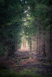 Primeval forest Royalty Free Stock Image
