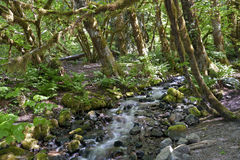 Primeval rain forest Stock Image