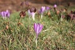 Primi frutti dei fiori La sorgente sta venendo qui le prime piante della fioritura di marzo, la buona stagione arriva fotografia stock libera da diritti