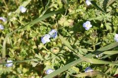 Primi frutti dei fiori La sorgente sta venendo qui le prime piante della fioritura di marzo, la buona stagione arriva immagine stock libera da diritti