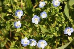 Primi frutti dei fiori La sorgente sta venendo qui le prime piante della fioritura di marzo, la buona stagione arriva fotografie stock libere da diritti