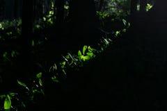 Primi nastri della luce di mattina Immagini Stock