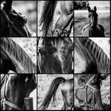 Primi piani dei cavalli Fotografia Stock Libera da Diritti
