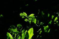 Primi raggi di luce nella foresta Fotografia Stock Libera da Diritti