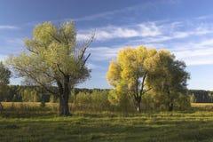 Primi segni dell'autunno Fotografie Stock Libere da Diritti