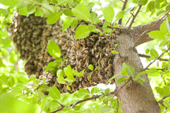 Primitieve bijenbijenkorf Stock Foto