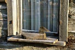 Primitieve eend op vensterrichel royalty-vrije stock foto