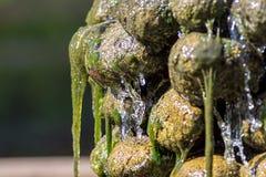 Primitiv soppa Hal täckt vattenfallträdgård f för gröna alger Arkivfoto