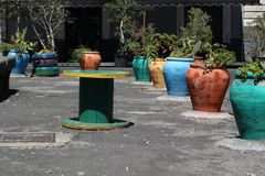 Colored pots with plants Stock Photo