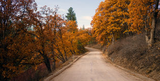 Primitive Road Leads to California Woods Fall Color Stock Image