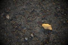 Primo foglio d'autunno Fotografia Stock