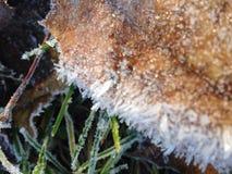 Primo gelo Fotografie Stock