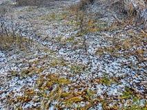 Primo gelo invernale Immagine Stock