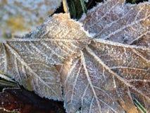 Primo gelo sulle foglie Immagini Stock Libere da Diritti