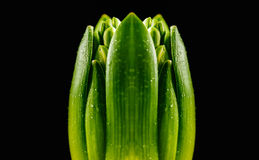 Primo germoglio verde Fotografie Stock